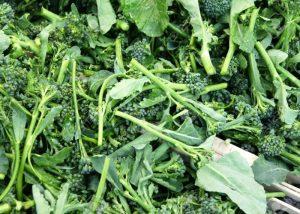 Broccoletti Romani